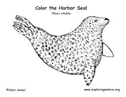Seal Coloring Page Navy Seal Coloring Pages To Print Arcadexme