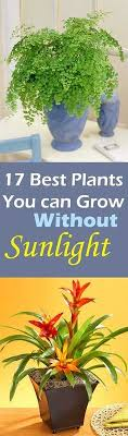 low maintenance office plants. Plants That Thrive In Winter ! 17 Low Maintenance Indoor \u0026 Outdoor You Can Grow Office