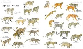 Secrets Of The Worlds 38 Species Of Wild Cats National