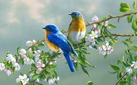 Flowers And Birds Wallpapers ...