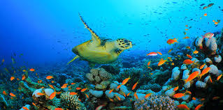 Image result for the ocean