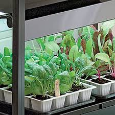 lighting for houseplants. Lighting For Houseplants