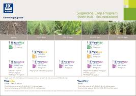 Sugarcane Fertilizer Chart Fertiliser Application Strategies For Sugarcane Yara India