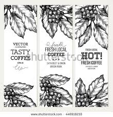 vintage coffee plant illustration.  Plant Coffee Tree Illustration Engraved Style Vintage Coffee  Banner Collection Vector Illustration On Plant Illustration L