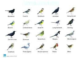 garden birds. garden bird identification poster full image for common birds .