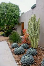 oversized cacti and succulent rock garden with a desert feel