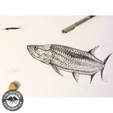 tarpon drawing. tarponsketch tarpon drawing