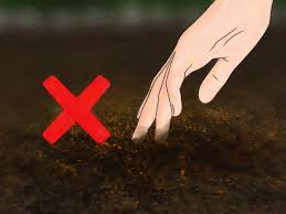 3 Ways to Deal with Black Spot Leaf Disease - wikiHow