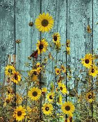 rustic sunflowers erfly country farmhouse wall art home decor matted picture