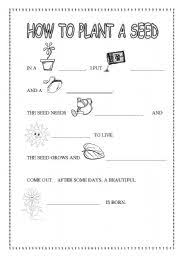 Life Cycle Of A Bean Plant For Kids Worksheet furthermore  additionally Butterfly Life Cycle   Butterfly life cycle  Cycling and Butterfly moreover 145 best Preschool Plants and Gardens images on Pinterest   Nature furthermore Preschool Art Activities and Printable Learning Activities together with Bean Plant Life Cycle and Growth Teaching Resources   SparkleBox further Image result for types of plants worksheets for kindergarten moreover Seed to Plant Coloring   Worksheet likewise Hangin' with Mrs  Cooper  Billy the Bean moreover  together with How Do Plants Grow  Plant Life Worksheets for Kids. on bean planting preschool worksheet