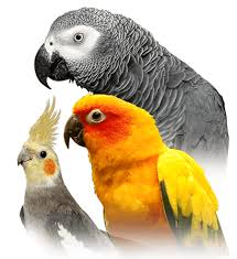 Parrot Personality Food Care Pet Birds By Lafeber Co