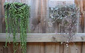 plaques ideas kit bunnings images photos herb tank indoor designs mains hangings powered artificial kits design