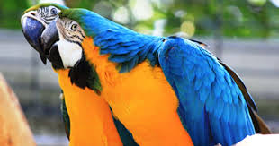 Could Plugging In A Playlist Be The Key To Happy Parrots Or