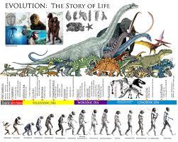 Human Evolution Timeline Buscar Con Google Human