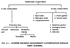 biodiversity types importance and conservation methods  scheme showing biodiversity conservation management systems