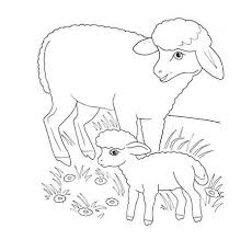 Small Picture butterfly sheep coloring page baby lamb sheep pictures sheep