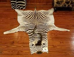 authentic zebra skin rug rugs for trophy room inside real decorations architecture real