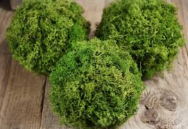 Decorative Moss Balls Reindeer Moss 60 Balls set of 60 11