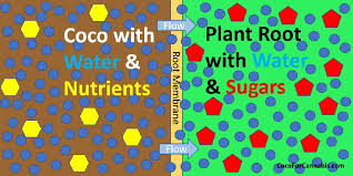 Ec Ppm Conversion Chart Understanding Osmosis And Ec Coco For Cannabis Science