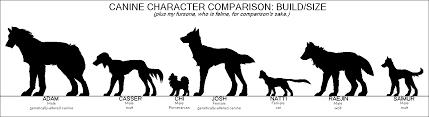 Wolf Vs Dog Size Chart Unmistakable Dog Size Comparison Chart English Mastiff