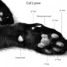 when do you need to trim your cat s claws