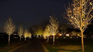 landscape lighting trees. uplights highlight trees landscape lighting