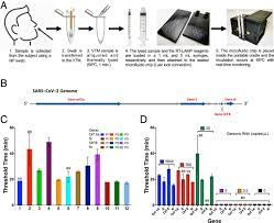 Rapid isothermal amplification and portable detection system for SARS-CoV-2