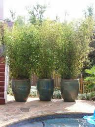 Some great backyard/garden ideas here! DIY Potted bamboo screen: 22  Fascinating and Low Budget Ideas for Your Yard and Patio Privacy