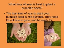 The Growth Of A Pumpkin Powerpoint By Chelsie Martinazzi Tpt