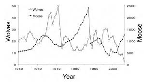 Moose Growth Chart Wolf Population On Isle Royale Drops To 3 Lowest Ever