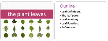 Plant Leaves Powerpoint Presentations Zone