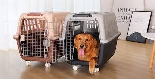 2021最全带宠物坐飞机攻略,附国内外可携带宠物上飞机的航空公司汇总以及政策对比- Extrabux