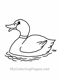 Small Picture Bunch Ideas of Printable Animal Coloring Pages Pdf With Template