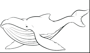 Printable Shark Fin Template Fish Patterns Free Ff First