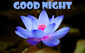 Beautiful Good Night Images Good Night Good Night Pics
