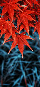 Iphone Wallpaper Leaves Fall