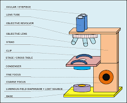 Parts Of The Microscope Parts And Components Of Light Microscopes Light Microscope