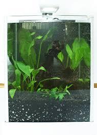 diy how to make a planted tank or aquascape