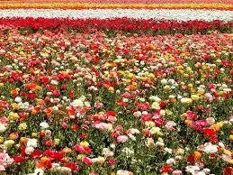 La Felicidad no crece en el huerto del envidioso