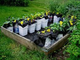 2 bucket self watering pot