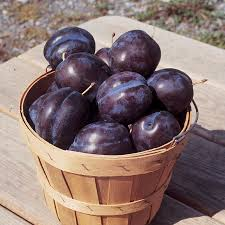 Best 25 Plum Varieties Ideas On Pinterest  Red Wine Glasses Non Do You Need 2 Plum Trees To Produce Fruit