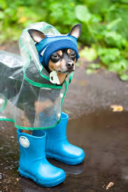 5,653 Dog In Rain Stock Photos, Pictures & Royalty-Free Images