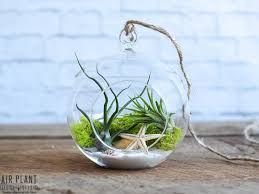 whats not to love about this unique hanging air plant terrarium the sea scape air