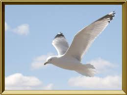 Чайка птица Описание чайки с картинками Чайка