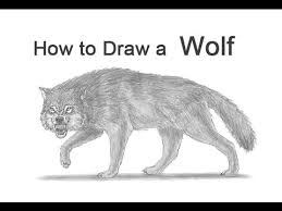 white wolf growling drawing. How To Draw Wolf Growling Snarling Inside White Drawing