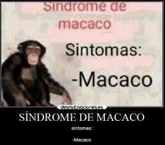 Macaco : orslokx