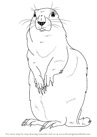 Small Picture Learn How to Draw an Arctic Ground Squirrel Other Animals Step
