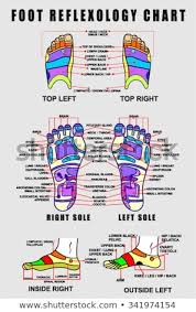 Top Of Foot Reflex Chart Vector Images Illustrations And Cliparts Foot Reflexology