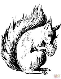Squirrel Coloring Pages Dapmalaysiainfo