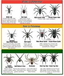 Spider Identification Chart California California Spider Identification Chart Southern California
